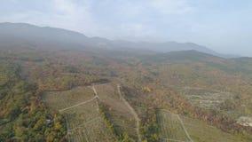 秋天有薄雾的森林顶视图山的 射击 山和农业领域全景在雾的在秋天 股票录像
