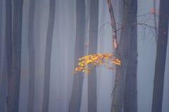秋天有薄雾的森林,抽象最低纲领派自然背景 库存照片