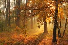秋天有薄雾的森林 免版税图库摄影