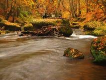 秋天有被弄脏的波浪的,新鲜的绿色生苔石头山河 免版税库存图片