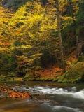 秋天有被弄脏的波浪的,新鲜的绿色生苔石头,五颜六色的秋天山河 库存照片