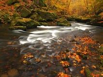 秋天有被弄脏的波浪的,新鲜的绿色生苔石头,五颜六色的秋天山河 免版税图库摄影