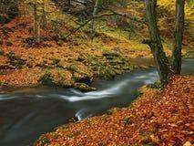 秋天有被弄脏的波浪的,新鲜的绿色生苔石头,五颜六色的秋天山河 免版税库存照片