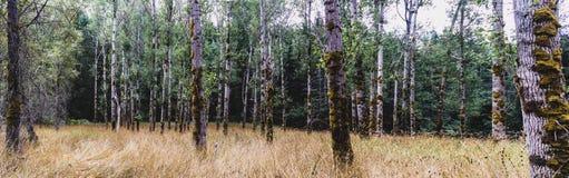 秋天有轻的陈列的8森林地森林 库存图片