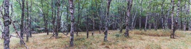 秋天有轻的陈列的6森林地森林 库存图片