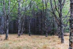 秋天有轻的陈列的1森林地森林 免版税库存图片