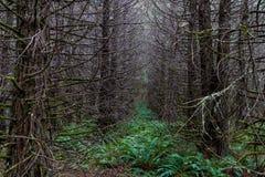 秋天有轻的陈列的3森林地森林 图库摄影