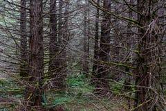 秋天有轻的陈列的4森林地森林 免版税库存照片