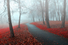 秋天有雾的公园胡同-五颜六色的秋天有雾的风景视图 库存图片