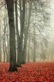 秋天有雾的公园-五颜六色的秋天风景 免版税库存图片