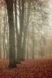 秋天有雾的公园-五颜六色的秋天风景 图库摄影