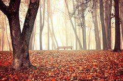 秋天有雾的公园-美好的秋天风景 库存图片