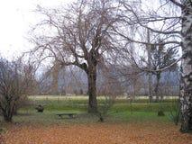 秋天有雾的庭院 免版税库存图片