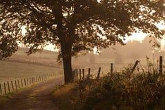 秋天有雾的早晨 库存图片