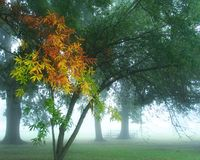 秋天有雾的早晨 免版税库存照片