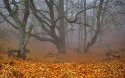 秋天有雾的森林山沟 免版税库存照片