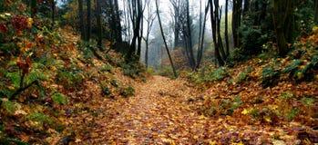 秋天有雾的森林路径 库存照片