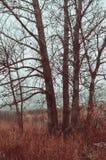 秋天有雾的森林风景-在有薄雾的天气的光秃的秋天树 免版税库存图片