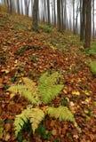 秋天有雾的森林 免版税库存图片