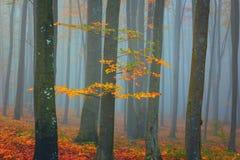 秋天有雾的神秘的森林,秋天上色自然背景 库存照片