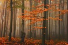 秋天有雾的神秘的森林,秋天上色自然背景 免版税库存照片