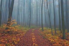 秋天有雾的神秘的森林,秋天上色自然背景 免版税库存图片