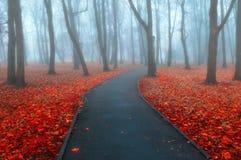 秋天有雾的胡同-五颜六色的秋天有雾的风景视图 库存图片