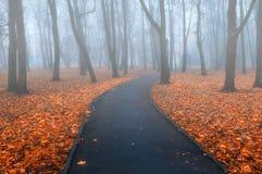 秋天有雾的胡同-五颜六色的秋天有雾的风景视图 免版税库存照片