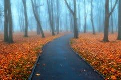 秋天有雾的胡同-五颜六色的秋天有雾的风景视图 库存照片