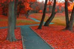 秋天有雾的胡同-五颜六色的秋天风景视图 与光秃的秋天树和橙色下落的叶子的秋天风景 免版税库存照片