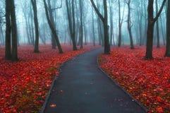 秋天有雾的胡同-五颜六色的秋天风景视图 库存图片