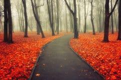 秋天有雾的胡同-五颜六色的秋天风景视图 图库摄影