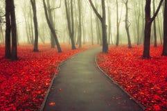 秋天有雾的胡同-五颜六色的秋天风景视图 库存照片
