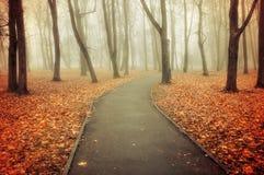 秋天有雾的胡同-五颜六色的秋天风景视图 免版税库存图片