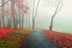 秋天有雾的胡同-停放在冷的口气的秋天风景 秋天自然视图 免版税库存照片