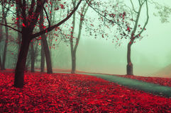 秋天有雾的胡同-美好的秋天风景 库存图片