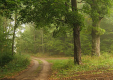 秋天有雾的路 免版税库存照片