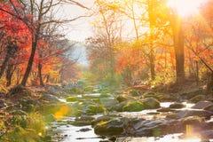 秋天有黄色树叶子的小河森林 免版税库存照片