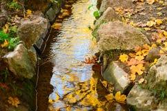 秋天有黄色的小河森林离开叶子和岩石 免版税图库摄影