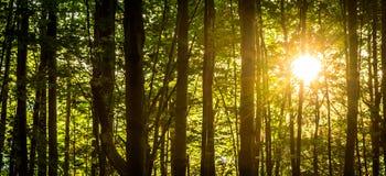 秋天期初草绿色留下黄色 免版税库存照片