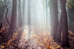 秋天木头用早晨明亮的sunlight_盖 库存照片