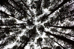 秋天木头 免版税库存照片