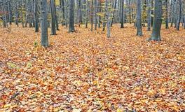 秋天木头 库存照片