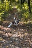 秋天木头的美丽的妇女举了一片叶子,在中间 库存图片