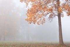 秋天本质。 与苗条结构树的有薄雾的横向 免版税库存图片