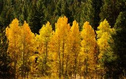 秋天来到东部山脉的 库存图片