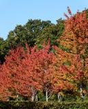 秋天来到贝辛斯托克 图库摄影