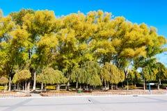 秋天杨柳在公园 库存照片
