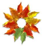 秋天构成叶子 免版税图库摄影