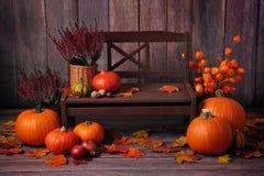 秋天构成用在一条棕色长凳的橙色南瓜 免版税图库摄影